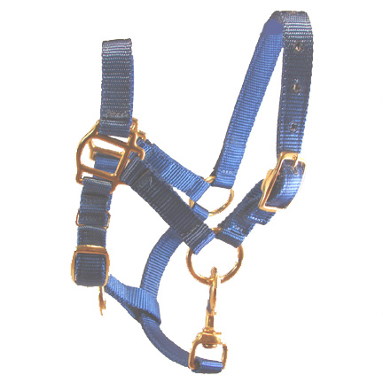 Adult Blue Miniature Donkey Halter For Sale