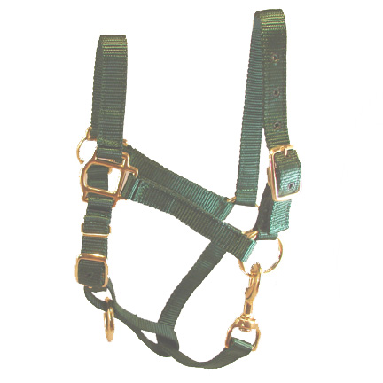 Adult Green Miniature Donkey Adult Halter For Sale