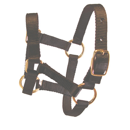 Weanling Black Miniature Donkey Halter For Sale