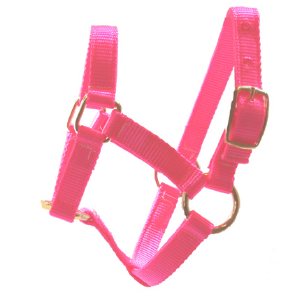 Weanling Hot Pink Miniature Donkey Halter For Sale