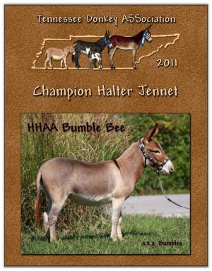 2011 Tennessee Donkey ASSociation High Point Halter Jennet