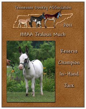 Tennessee Donkey ASSociation Reserve In-Hand Jack (Tie)