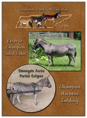 2011 Tennessee Donkey ASSociation High Point Driving Gelding