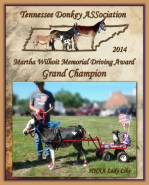 2014 Tennessee Grand Champion Driving Donkey