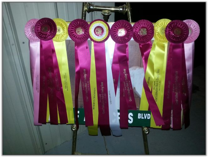 A few of our ribbons won at The Nationals