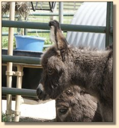Critter Haven Farm Applause